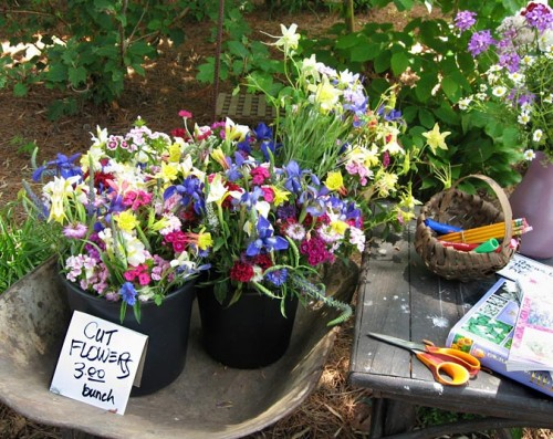 Cut flowers for sale
