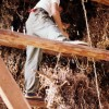 Gardner hanging peanuts in tobacco barn