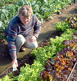 Pam in the greenhouse